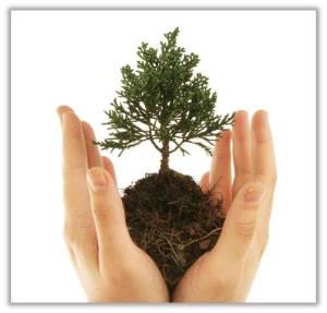 Get started now planting your data governance program.